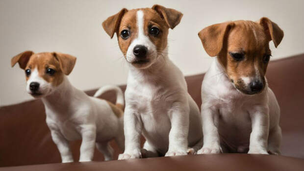 Американские ученые выяснили, в каком возрасте щенки вызывают наибольшее умиление