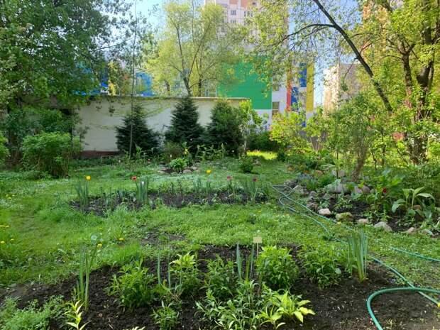 Фото дня: двор с ландшафтным дизайном на Шереметьевской