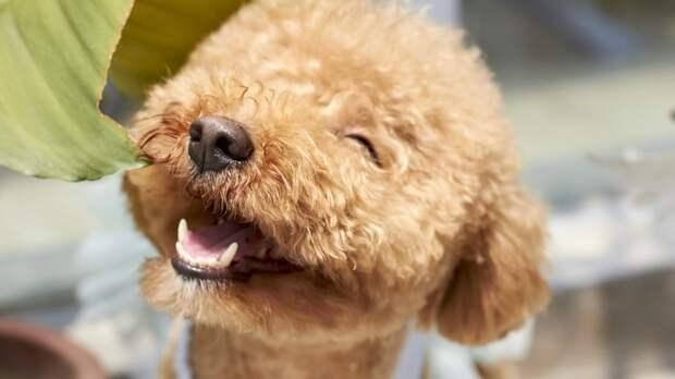 Молоко назвали смертельно опасным напитком для собак