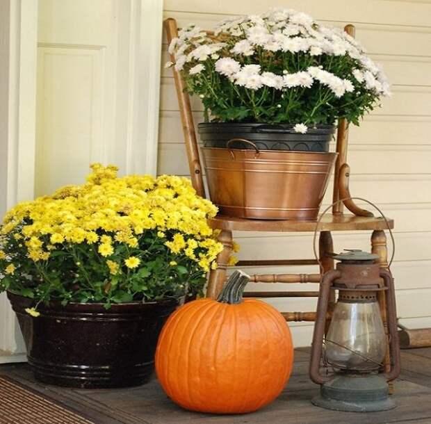тазы с цветами и тыквой