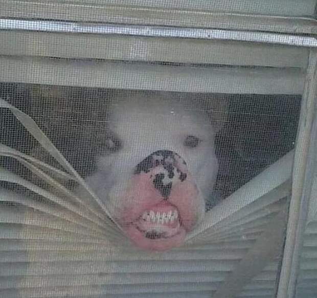 Шухер! врасплох, кошки, смешные, собаки, фото, шкодники