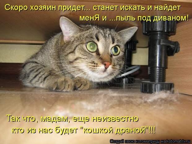 1474017309_kotomatricy-23