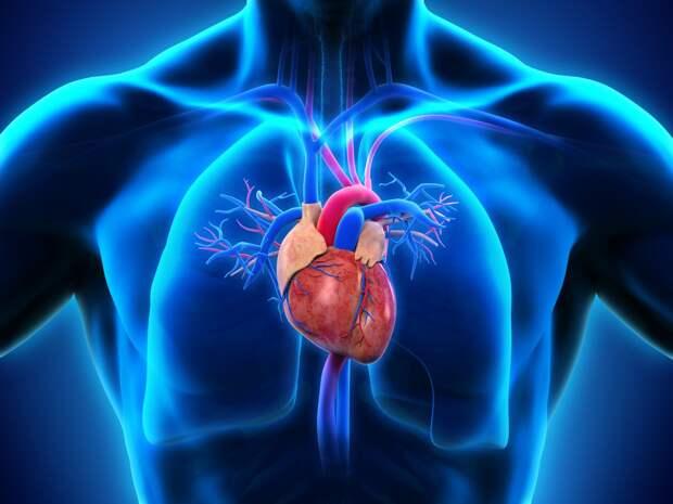 Коронавирус способен разрушать мышечные волокна сердца