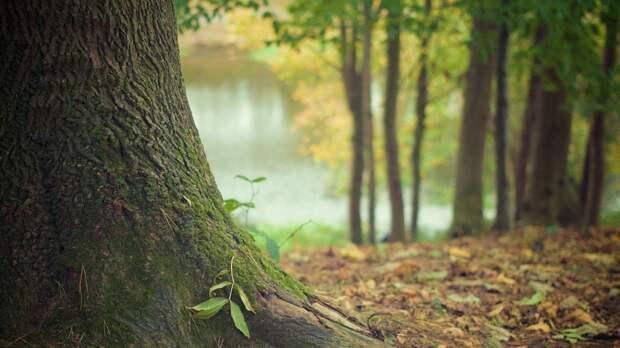 Дерево упало на женщину в Свердловской области