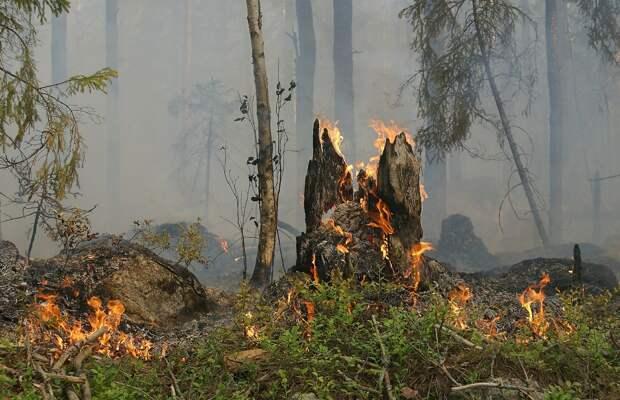Угроза лесных пожаров, поздравление медсестрам и проблемы с бензином в США: что обсуждали в последние несколько часов в республике, стране и мире.