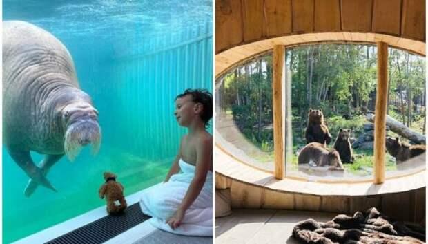 В бельгийском зоопарке открыли номера с видом на диких животных