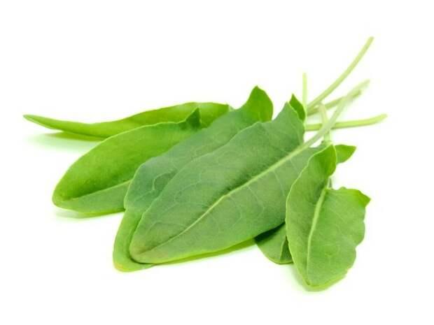 щавель - многолетняя зелень