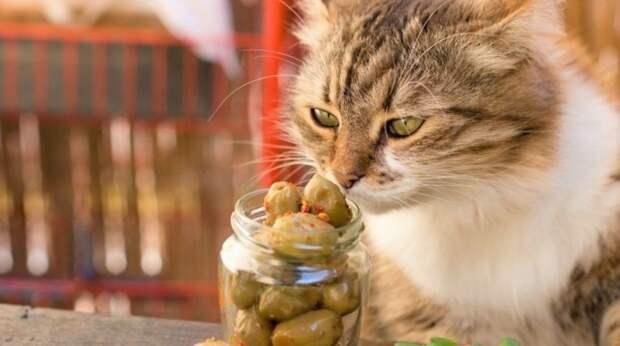 Почему ваша кошка без ума от оливок и можно ли их есть