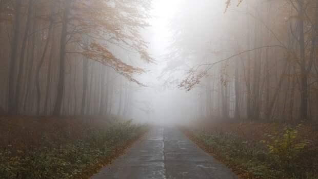 Туман, дожди и порывистый ветер прогнозируют синоптики в Белгородской области