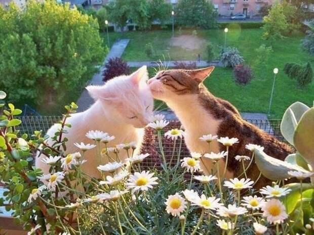 15. Любовь животные, кошки, красиво, милота, питомцы, смешные животные, собаки, фото
