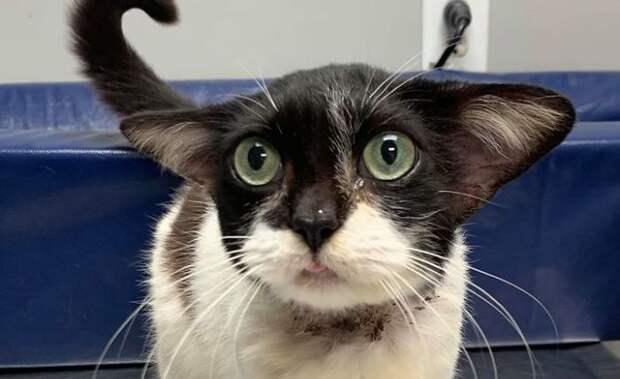 5 милых фото котика с ушами маленького Йоды