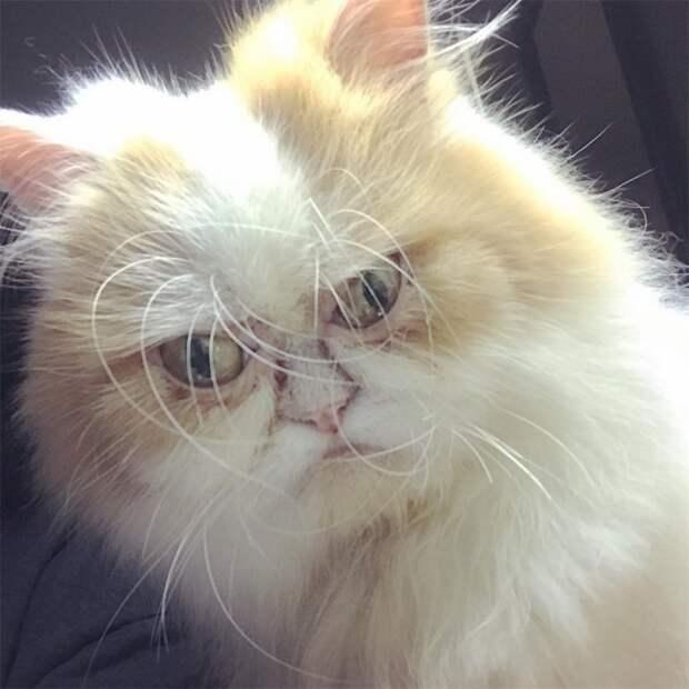 Новый самый сердитый кот