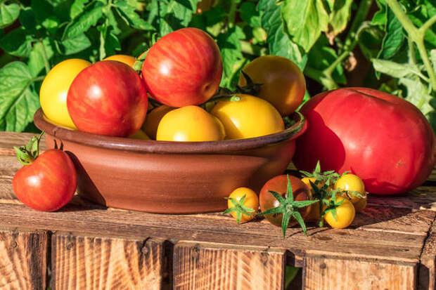 Вкусный или нет плод томата - вопрос далеко не праздный