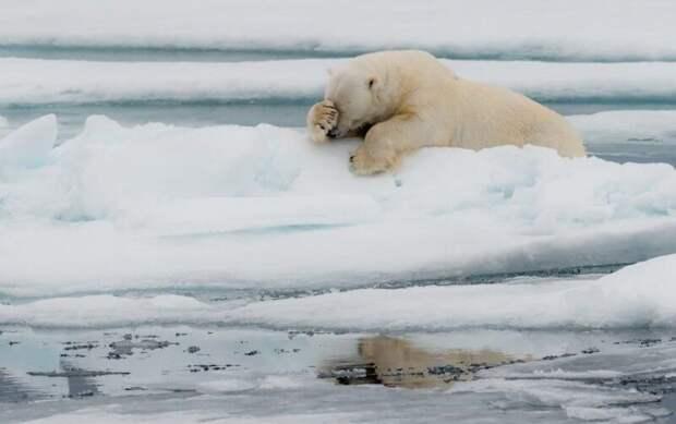 Самые смешные фото диких животных отфиналистов Comedy Wildlife Photography Awards 2020