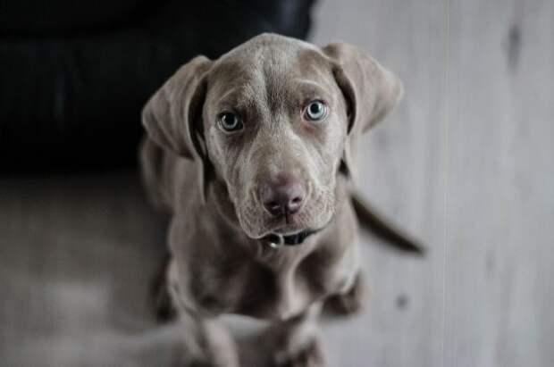 В Москве спасли тонущую в реке собаку