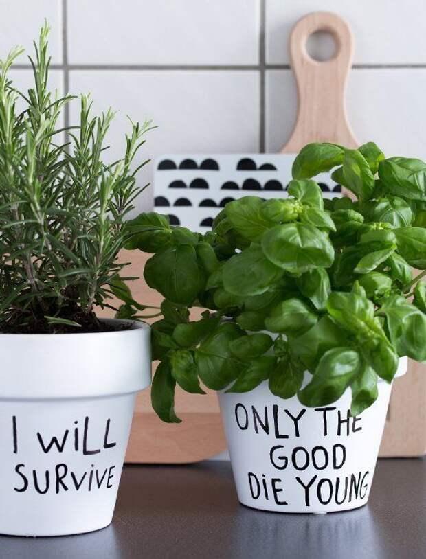 С такими надписями растения точно не спутать