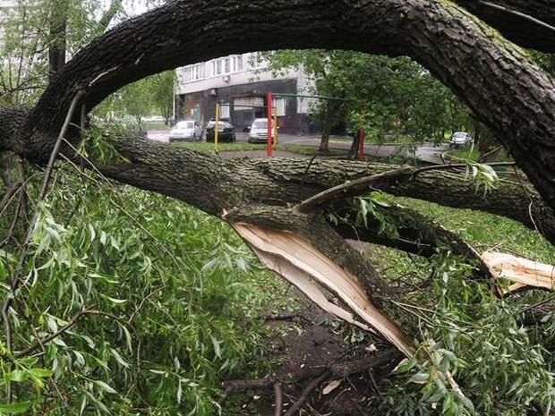 Шесть человек пострадали в Москве из-за последствий грозы и сильного ветра