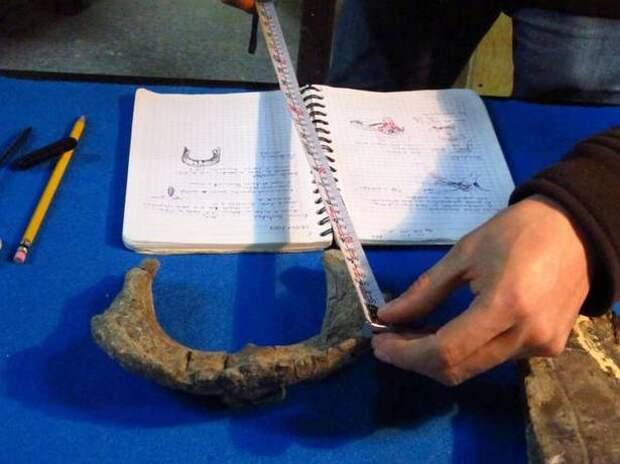 Палеонтологи Мексиканского Национального института антропологии и истории за работой