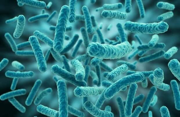 Бактерия не изменилась за 175 миллионов лет: как это получилось