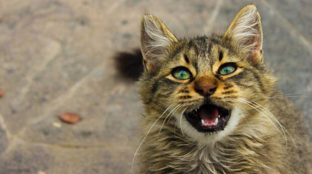 О чем мурлычет кот: кошачий словарь.
