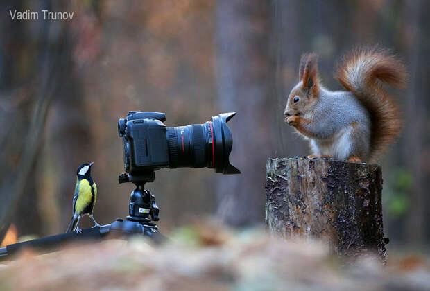 squirrel-photography-russia-vadim-trunov-1-1