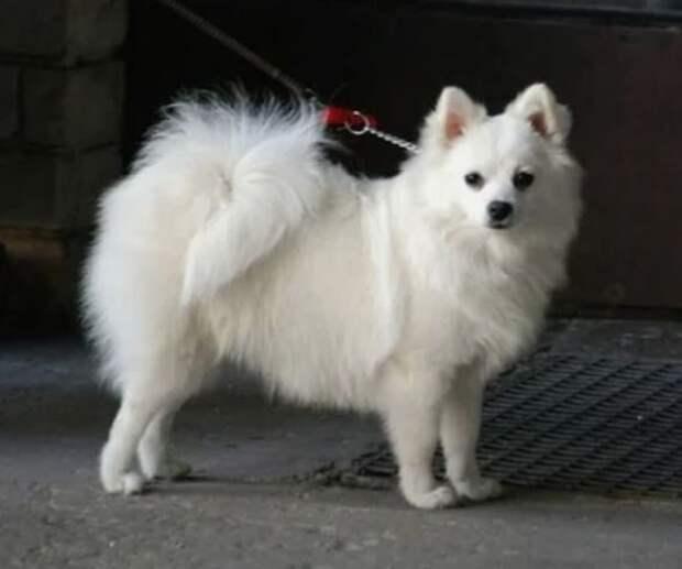 25 самых маленьких пород собак в мире