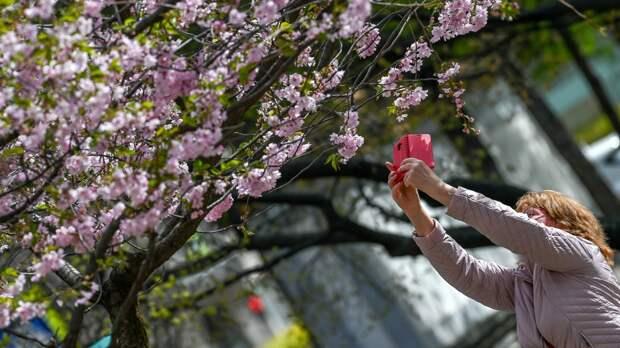 Волонтеров Петербурга пригласили в Ботанический сад для пресечения эротических фотосессий