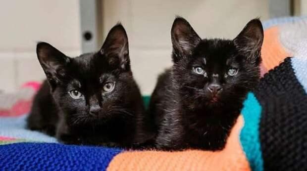 Два котика замерзали на улице от холода. Один из этих котиков спас своего слепого брата