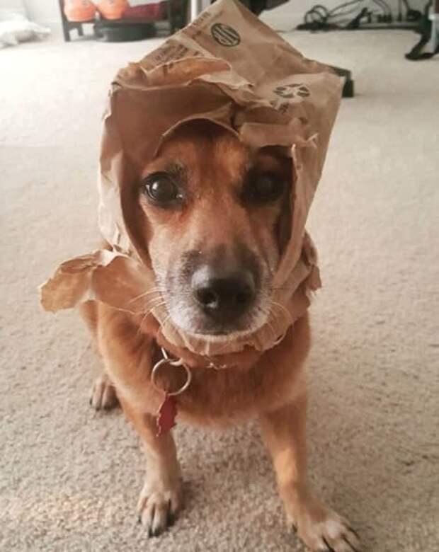Эта шляпка? А-а, это подарок! Я даже не помню, от кого животные, натворили, сама невинность, смешно, собаки, хулиганство, честные глаза, юмор