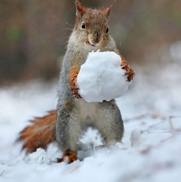 squirrel-photography-russia-vadim-trunov-5