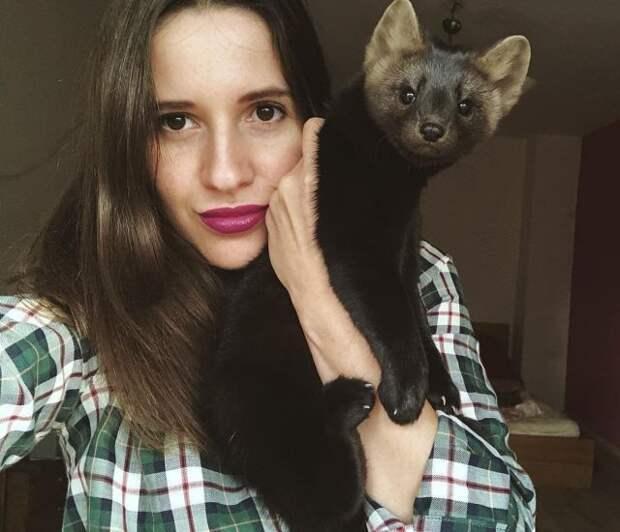 Умора - соболь, который стал питомцем девушки из России