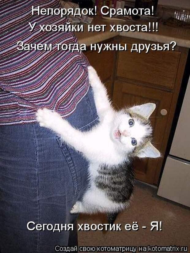 Котоматрица: Непорядок! Срамота! У хозяйки нет хвоста!!! Зачем тогда нужны друзья? Сегодня хвостик её - Я!