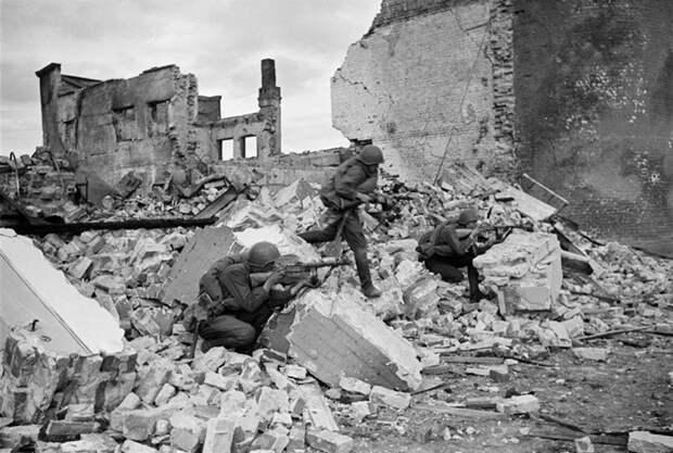 Как мыши помогли Красной Армии победить немцев в Сталинграде