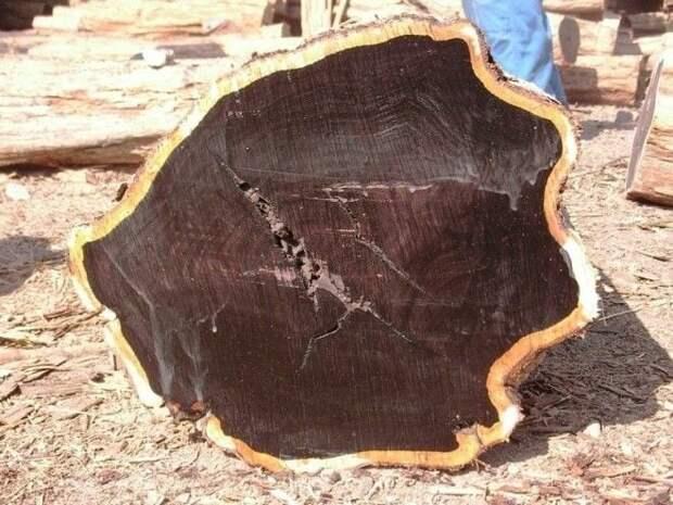 10 самых дорогих пород древесины в мире, которые превышают стоимость золота!