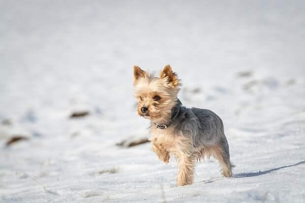Митино признали одним из лучших районов для жизни с собакой