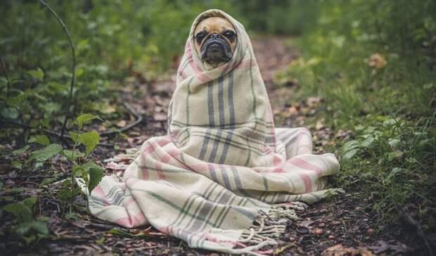 Ростовчане попросили построить приют для бездомных животных