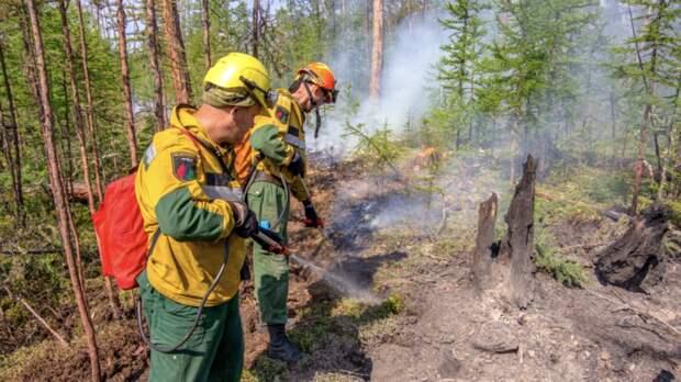 В России за сутки потушили 75 лесных пожаров