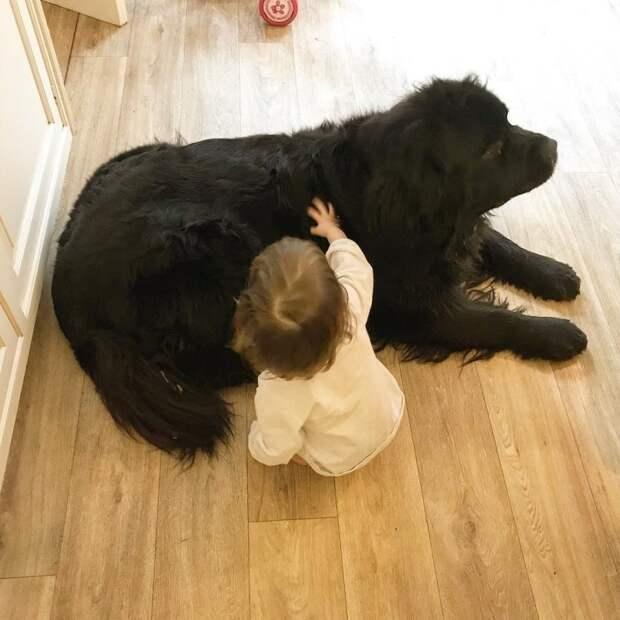 10. Большой защитник животные, животные и дети, кошки, питомцы, собаки, фото