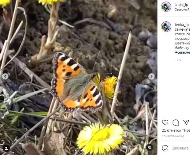 Фотокадр: на Долгих прудах уже летают бабочки