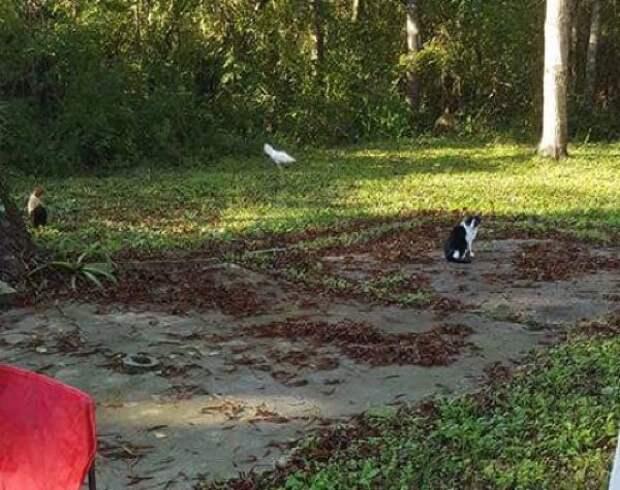 Хозяева пустили кота в дом погреться, но он решил остаться насовсем