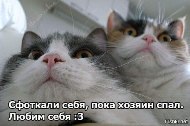 Любят себя, больше, чем кто-либо интересное, коты, смешное