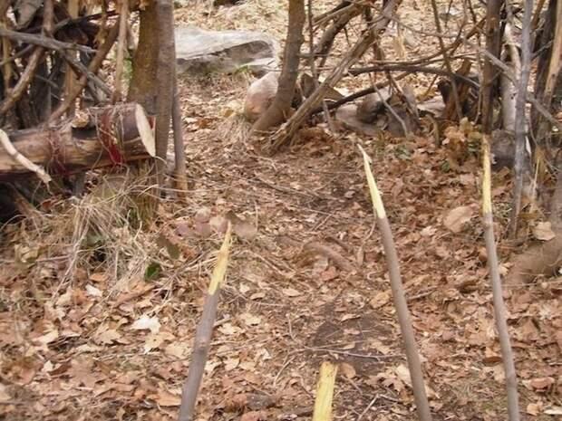 Опасные ловушки в парке отдыха (14 фото)