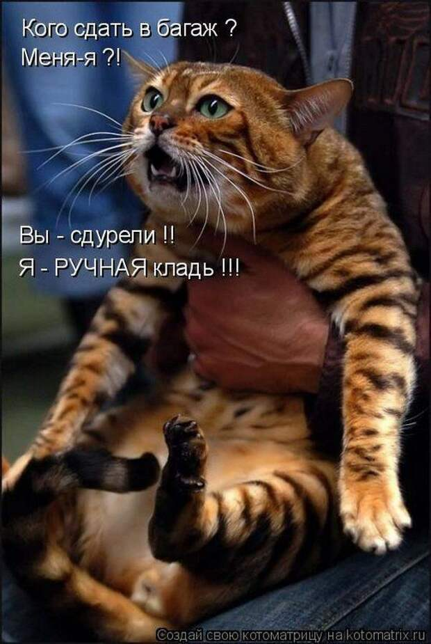 Американская байка про кота.