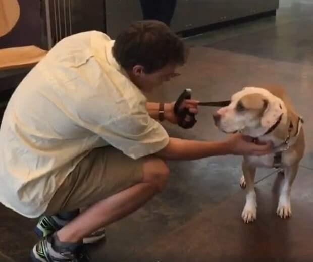 Люди не хотели брать в дом замечательного пса, но один звонок изменил его жизнь