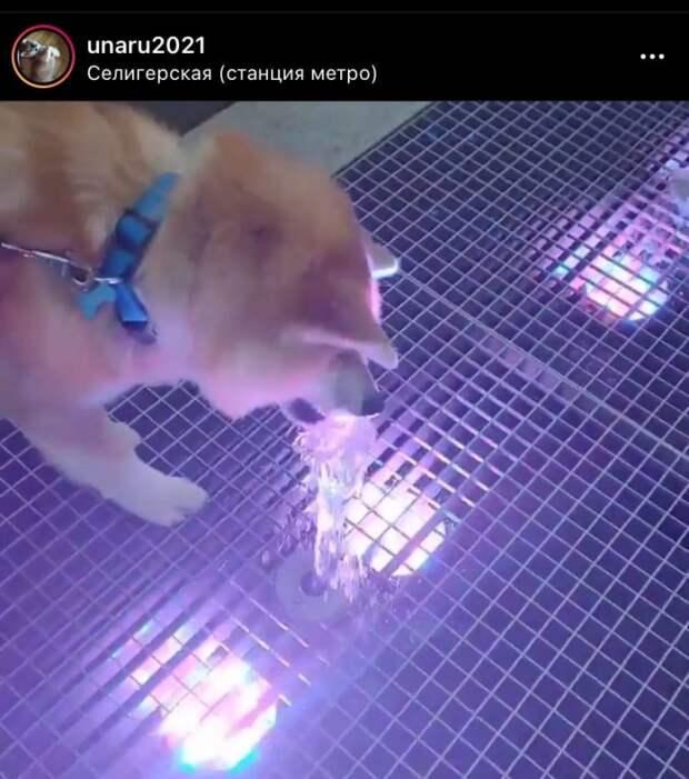 Фото дня: реакция собаки на фонтан в Бескудникове