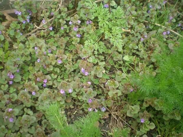 Признаки сибирского сада