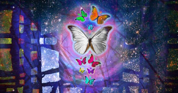 Духовное значение белых бабочек