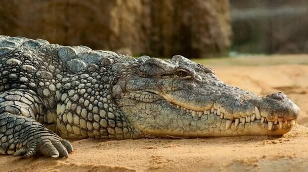 Крокодилы угрожают крымчанам в Азовском море