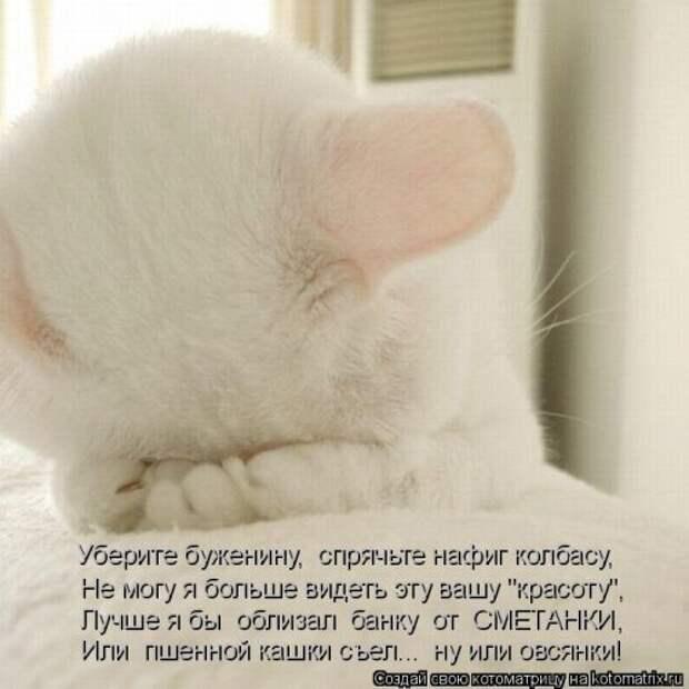 Веселые котоматрицы для хорошего настроения