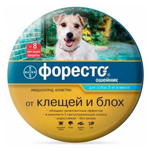 Весна пришла, клещей принесла: три самых популярных средства защиты собаки от их укусов